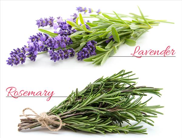 halena、ハレナ,ホットクレンジング,香り,匂い